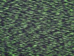 Funktionsjersey gestrichelt, hellgrün/grau