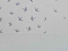 Magic Softshell Vögel, grau