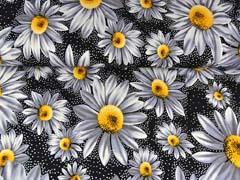 Viskosejersey Margeriten Pünktchen, gelb weiß schwarz