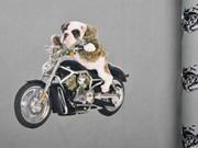 Jersey Stenzo Panel 2 in 1 Motorrad Hund grau (grünlich)