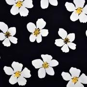 Baumwoll Stretch Stoff Blumen, weiß schwarz