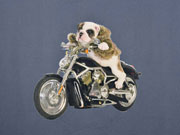 Jersey Stenzo Panel 2 in 1 Motorrad Hund jeansblau