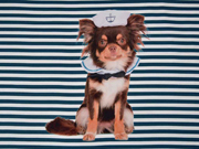 Jersey Panel Matrosen Hund Streifen, petrol