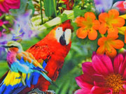 Reststück 66cm Jersey Digitaldruck Papagei & Blumen