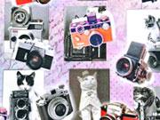 Jersey Digitadruck Katzen & Kameras