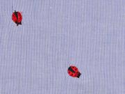 RESTSTÜCK 47 cm gestreifter Baumwollstoff bestickt Marienkäfern