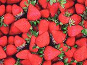 Jersey Digitaldruck Erdbeeren