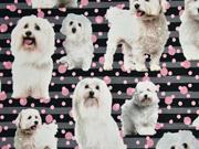 Jersey Digitaldruck Hunde, Streifen Punkte