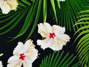 Jersey Hibiskus Blüten Blätter Digitaldruck, weiss grün schwarz