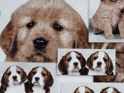 Digitaldruck Puppys, Hundefotos auf weiss