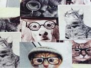Jersey Digitaldruck  Smart Cats and Dogs Katzen Hunde